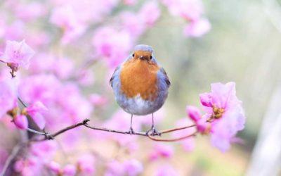Jarné stromy a skríženej alergie